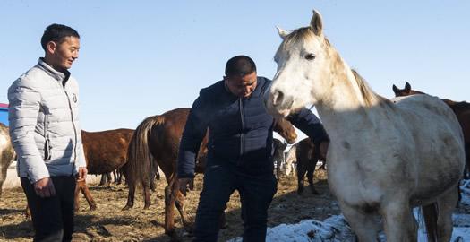 新疆昭蘇:養馬富農家