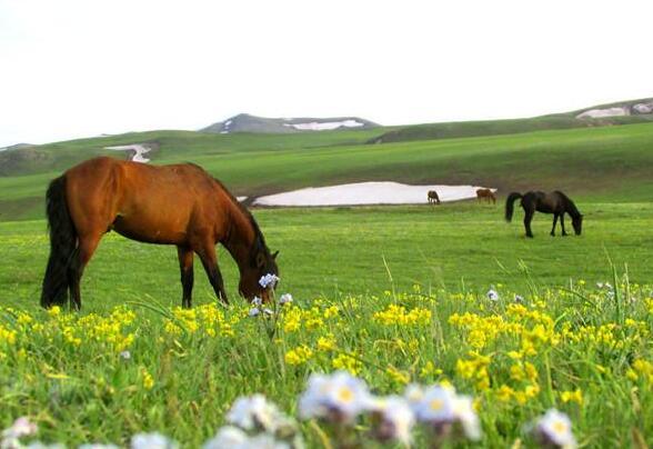 高山草原風景迷人
