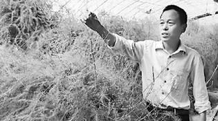 贾玉路:引种芦笋造福和田
