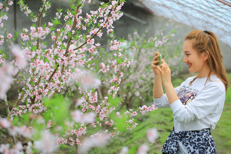 新疆博湖:桃花開 遊客來