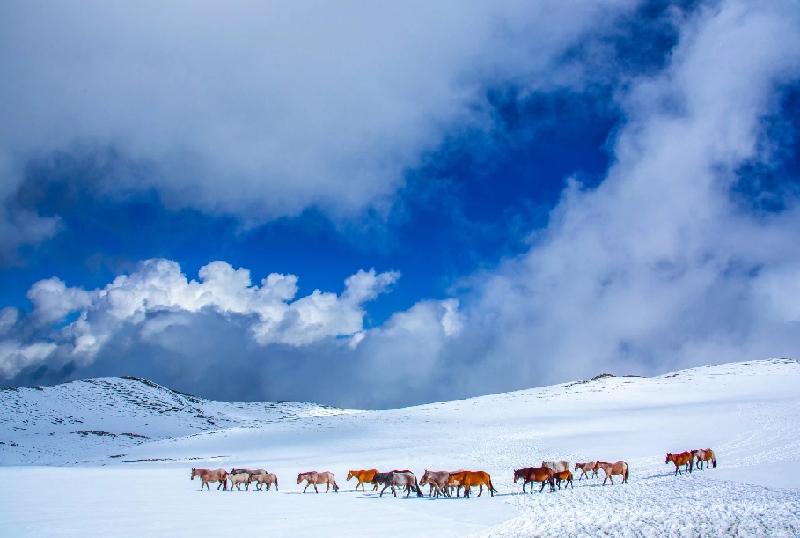 新疆是個好地方|雪地撒歡!看草原精靈踏雪覓食