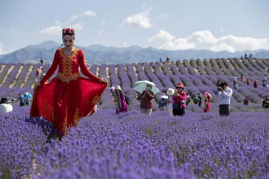 新疆是個好地方 新疆霍城第十屆薰衣草文化國際旅遊節開幕