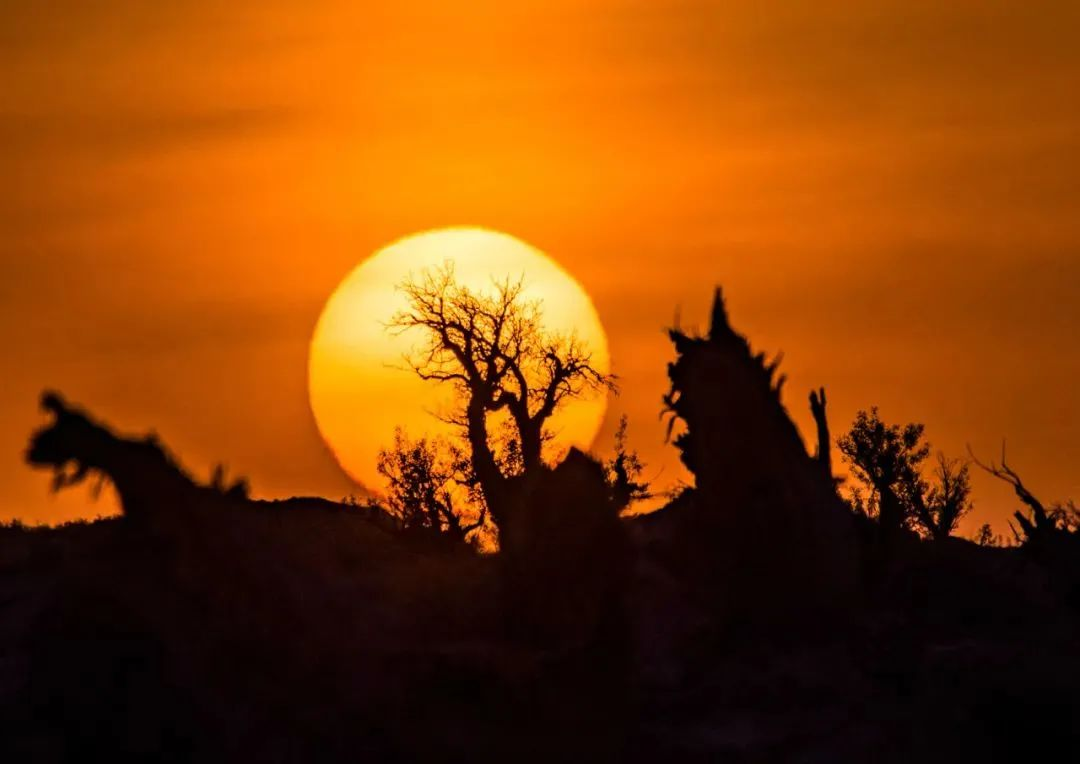 千萬不要和新疆的秋天比美,因為比不過